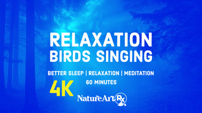 Relaxing Birds Singing | Fall Asleep Fast, Meditate, Relax and Destress