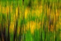 Abstract Coreopsis