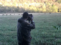 Photographing Wild Elk in the Ozark Mountains (Boxley Valley)