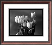 Winter Tulips # 1
