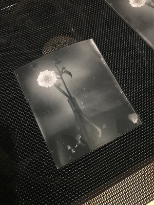 Silver Gelatin contact print from a glass dry plate negative.