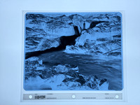 8x10 X-Ray Negative for Platinum Printing