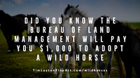 Bureau of Land Management Will Pay You $1,000 To Adopt a Wild Horse
