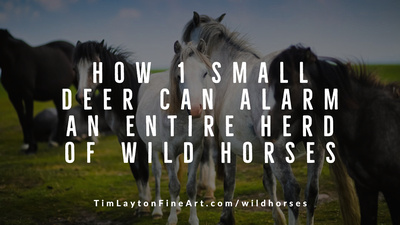 How 1 Small Deer Can Alarm an Entire Herd of Wild Horses by Tim Layton