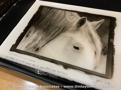 Learn Platinum & Palladium Printing by Tim Layton