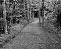Trail To John Oliver's Cabin - Cades Cove, Great Smoky Mountains B&W by Tim Layton
