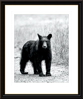 CADES COVE BLACK BEAR NO. 62520-1 - Web Frame by Tim Layton