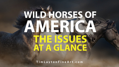 Wild Horses of America - The Issues at a Glance by Tim Layton