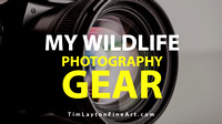 My Wildlife Photography Gear by Tim Layton