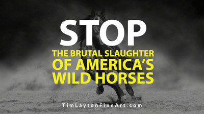 STOP The Brutal Slaughter of America's Wild Horses by Tim Layton