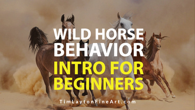 Wild Horse Behavior - Introduction For Beginners by Tim Layton