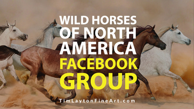 Wild Horses of North America Facebook Group by Tim Layton
