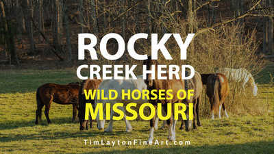Wild Horses of Missouri Rocky Creek Herd by Tim Layton
