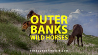 Outer Banks Wild Horses by Tim Layton