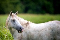 8/1/20 - Shawnee Creek Mare - Wild Horses of Missouri by Tim Layton