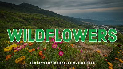 Wildflowers - Great Smoky Mountains National Park by Tim Layton