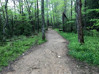 Trail to John Oliver Cabin