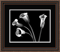 4 Sisters - Calla Lilies