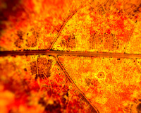 Impressionist - Fall Oak Leaf 2