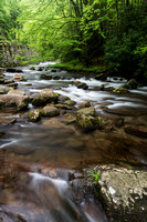 Smoky Mountain River - Early Spring after the Rain