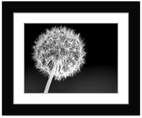 Dandelion - With Sample Mat & Frame