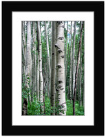 Aspen Trees - Vertical - With Sample Mat & Frame