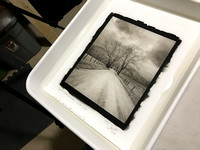Sparks Lane, Winter - GSMNP - New Pt/Pd Print Washing in Tray
