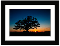 Sunset on the McBaine Bur oak Tree - With Sample Mat & Frame
